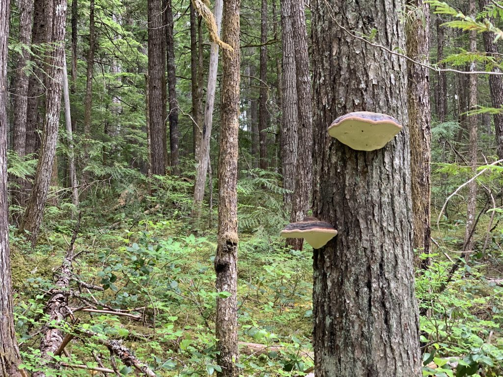 """A mushroom walks into a bar..."""